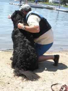 One of the Newfies get direction from his handler before being sent out into the water.
