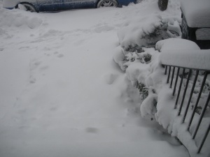View from the front door, BEFORE shoveling.