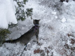 Kitteh!  In the snow!