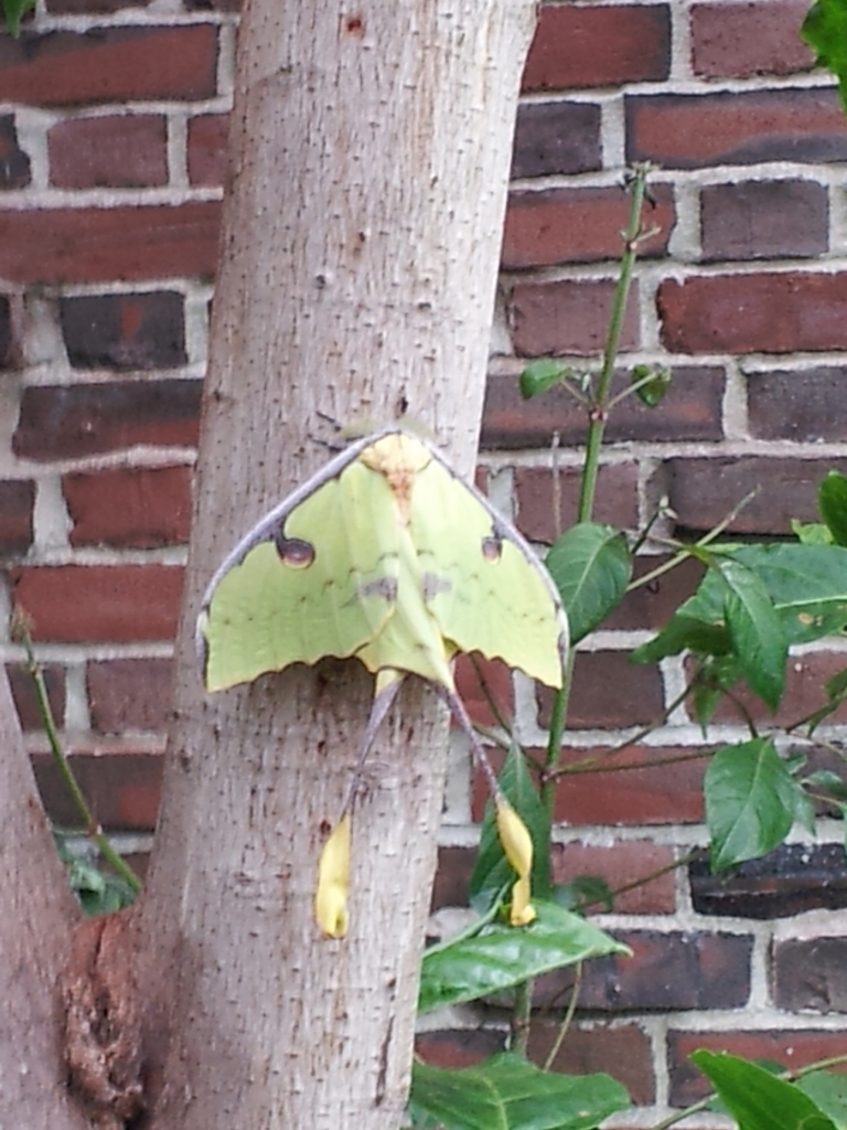 creepy green moth is creepy