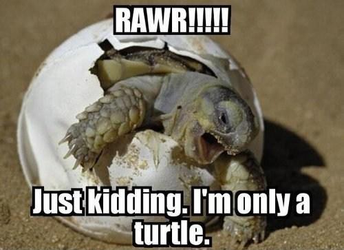 baby turtle RAWR