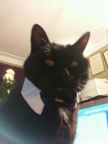 Bucky in his less formal wear. In true lord of the manor style, he showed up for meals and when he needed personal grooming. Yep, he was totally an Earl.