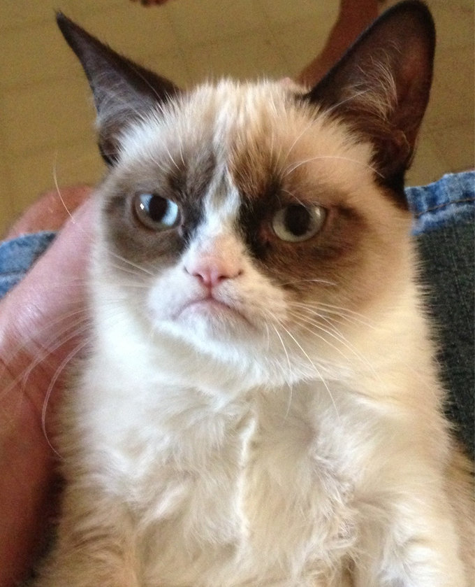 This is probably the iconic Grumpy Cat photo.