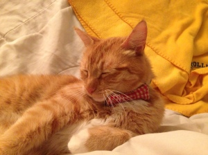 Sleepy Waffles still looks dapper in his bow tie.