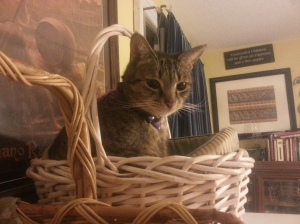 Old pet bed + free basket = comfy kitteh.
