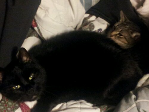 Bucky and Scratch, this was as close as they got to cuddling.
