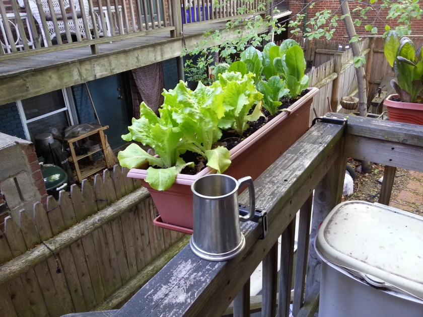 Pewter tankard of perry is optional when gardening.