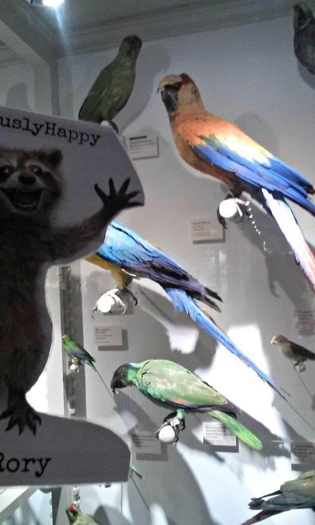 Pretty birds!