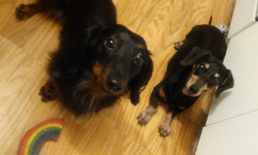 Can we go to playgroup?  We want to run around and we really only like to hang out with other dachshunds.