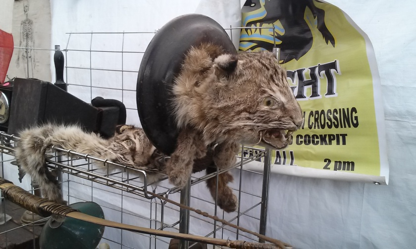A pair of badly taxidermied bobcats.