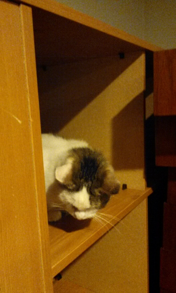 Hanging out in a bookshelf downstairs.