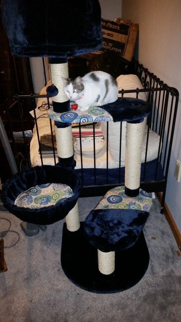 Violet on the basement cat tree