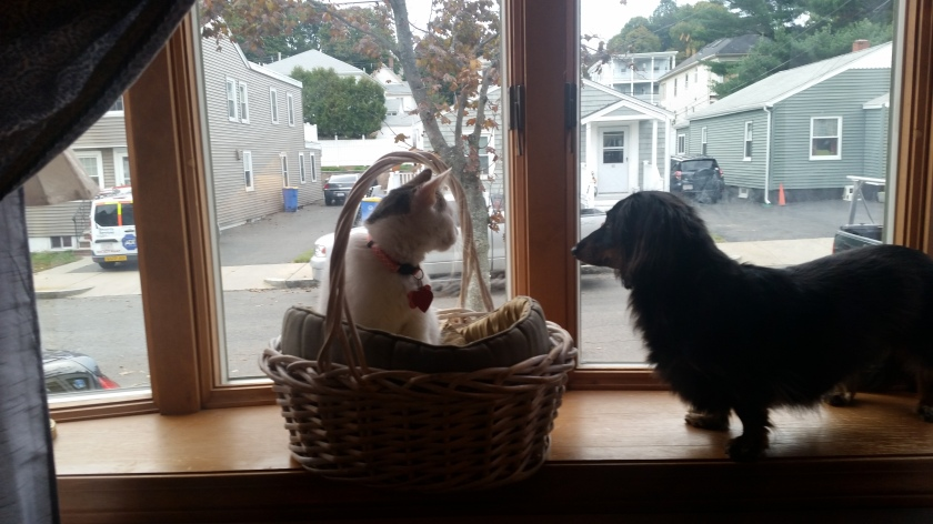 Violet in her window basket bed, with Dash sitting with her.