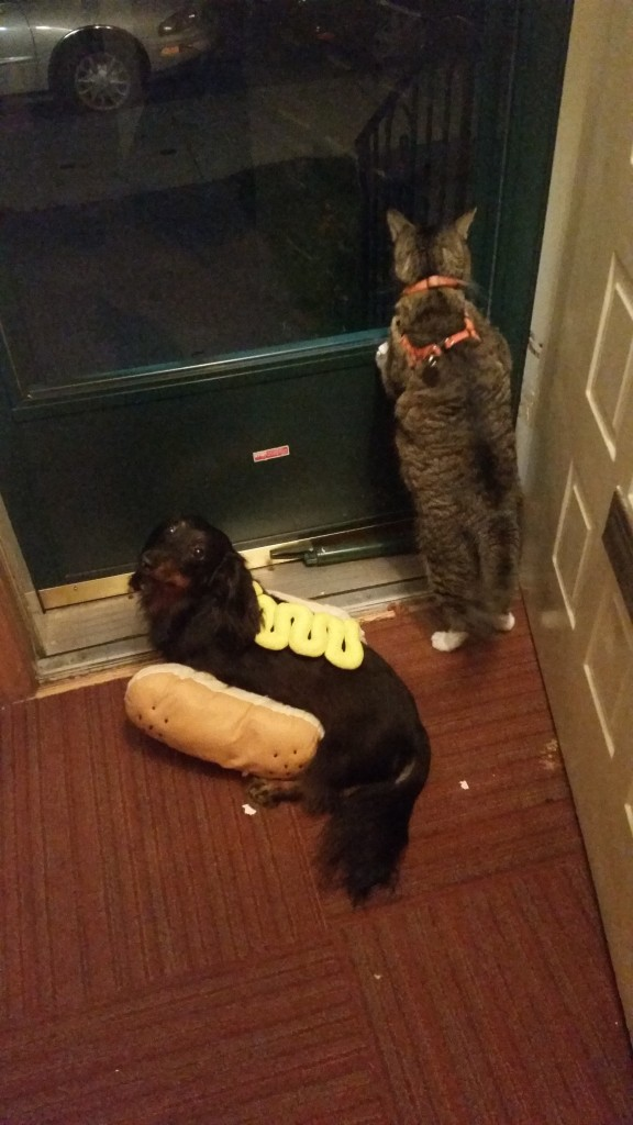 Scratch wants to go outside, but Dash just wants to know how much longer he has to be a hot dog.