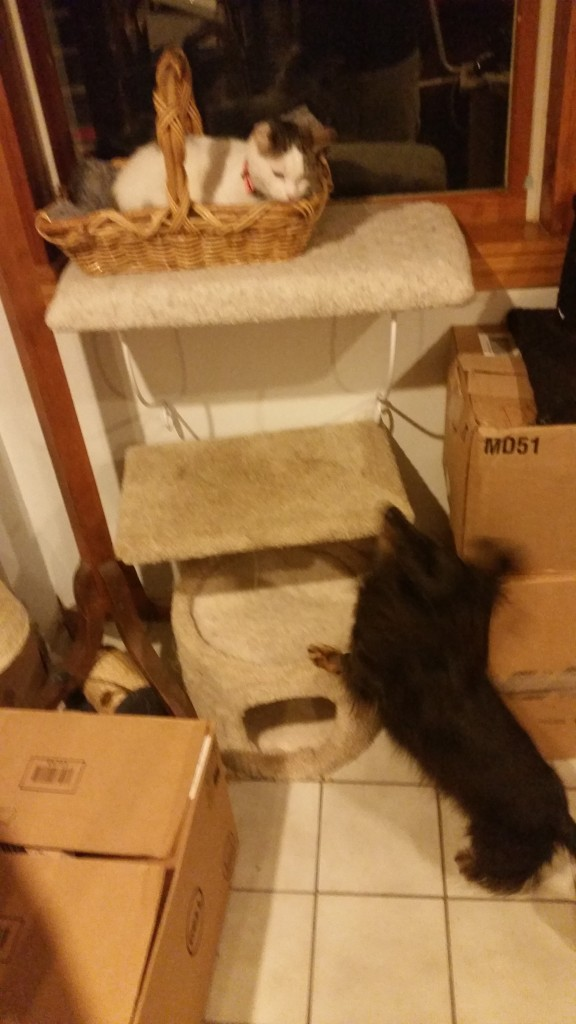 A blurry Dash makes a running leap towards Violet, who is sitting in Scratch's favorite cat bed in the basement window.