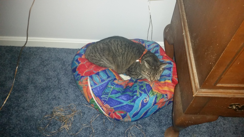 This is actually one of the dog beds, but Scratch does not care.