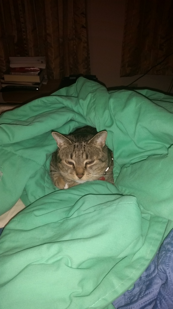 Scratch doesn't get under blankets often, but when he does, you KNOW it's cold.
